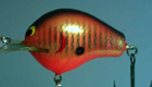 Bagley DB1 A2 (Orange Barfish)[10]